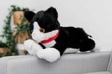 Premium Quality XXl Extra Large Teddy Cat Kitten Black Bengal Siamese Grumpy Cuddly Plush Soft Toy